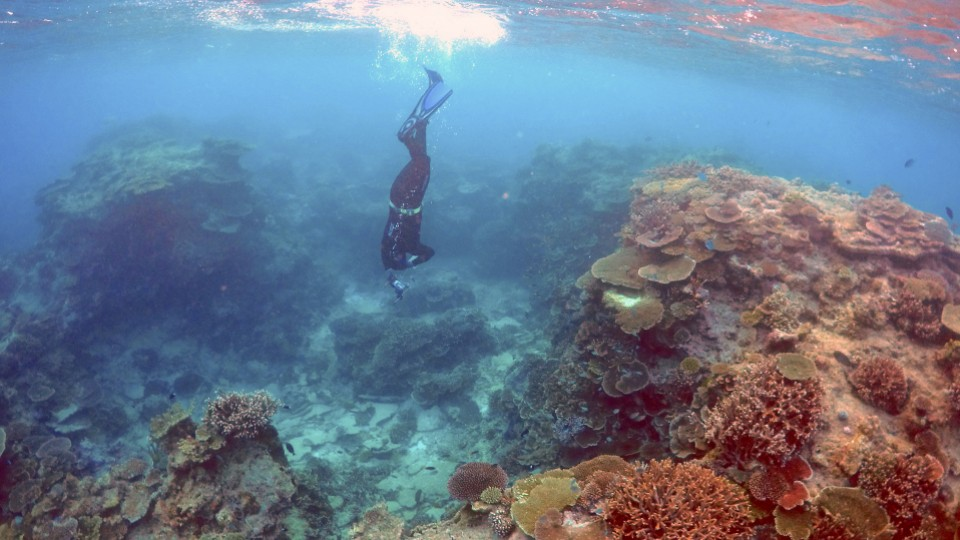 great barrier reef impacts of sea For years, researchers have documented the increasing impact of climate change on the great barrier reef, but very little is known about the reef's effect on the climate, particularly rainfall.